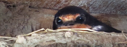 on nest closeup