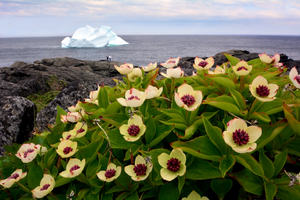 iceberg flowers couple