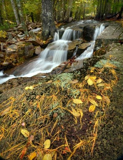 stream yellow pine needles