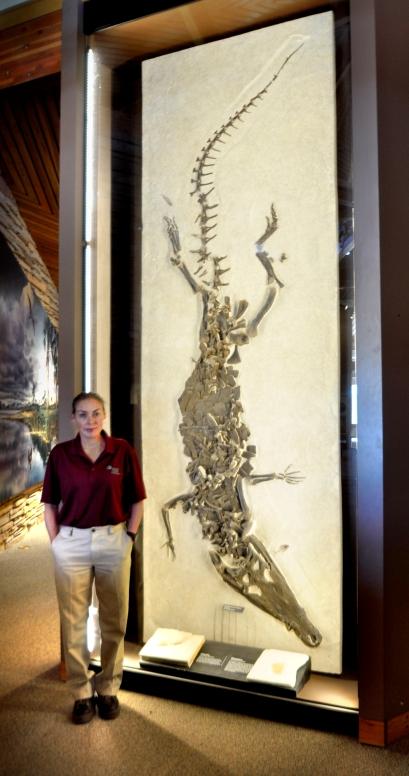 Borealosuchus wilsoni at Fossill Butte Natl Monument 20,000 visitors a year