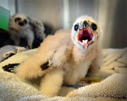 Pendleton blue mt wildlife babies